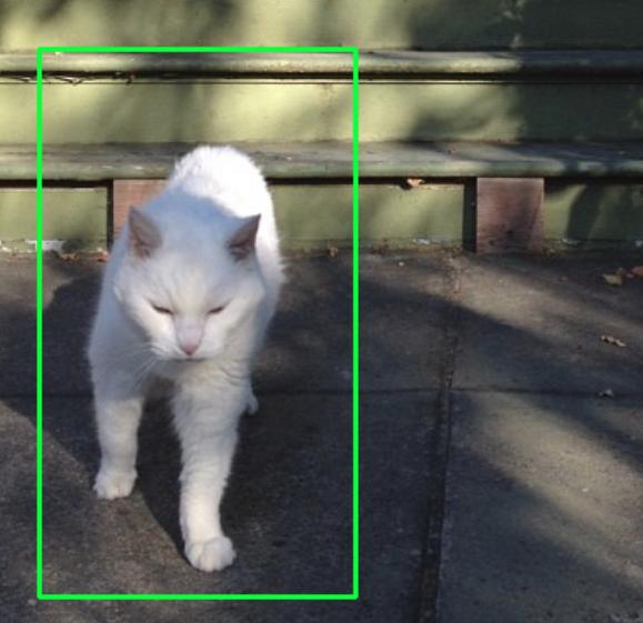 Detect a Cat