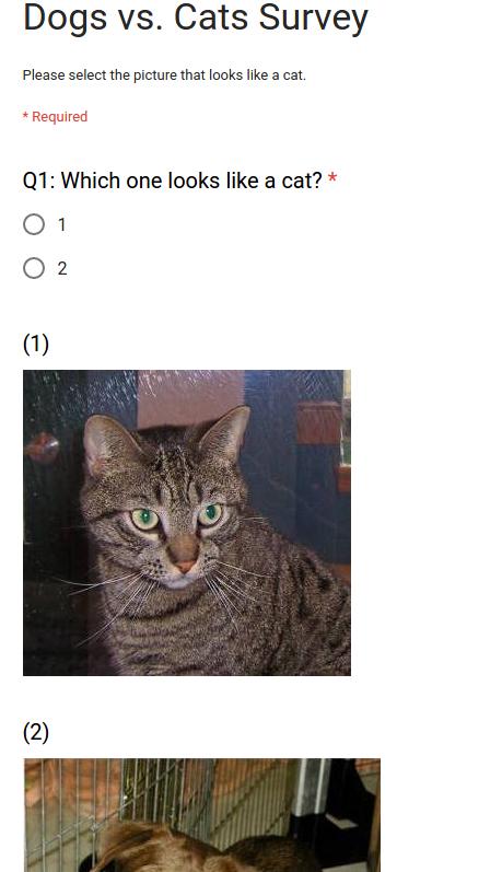 Dogs vs. Cats Survey